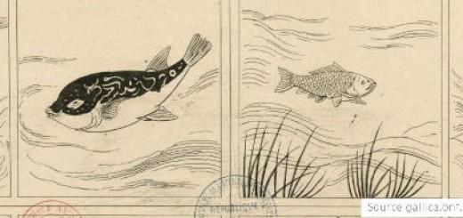 poissons-cnv-plongee